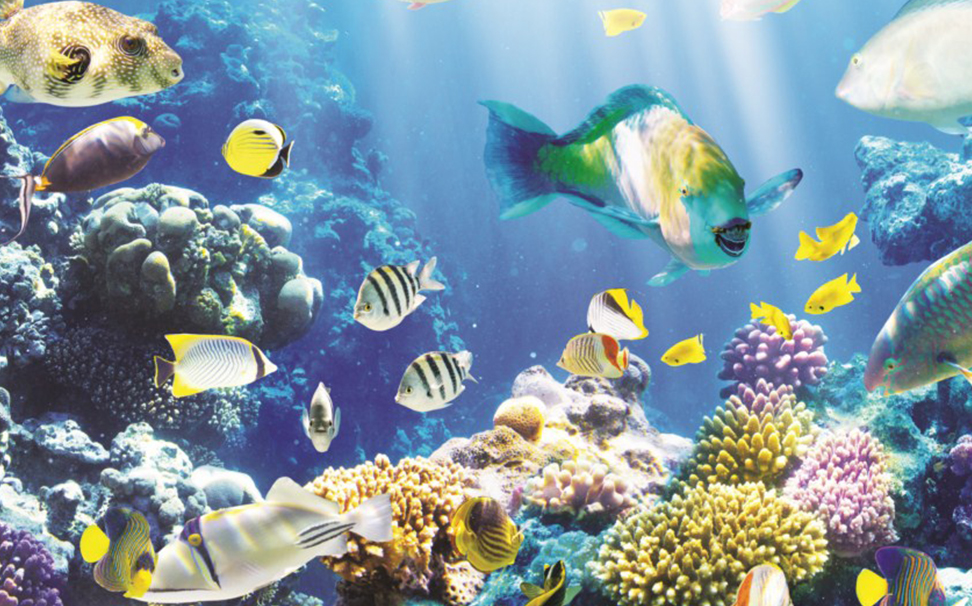 Brilliantly colored tropical fish & coral reef in a deep blue sea - Marshalls
