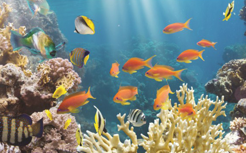 A wonderful underwater view of coral reef & fish - Marshalls