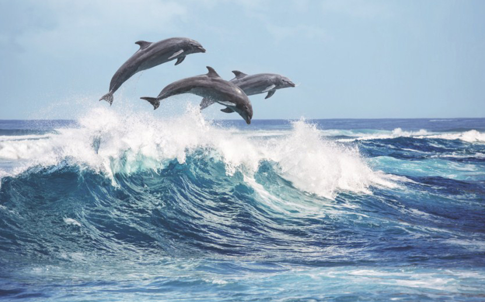 Three beautiful dolphins jumping over breaking waves - Marshalls