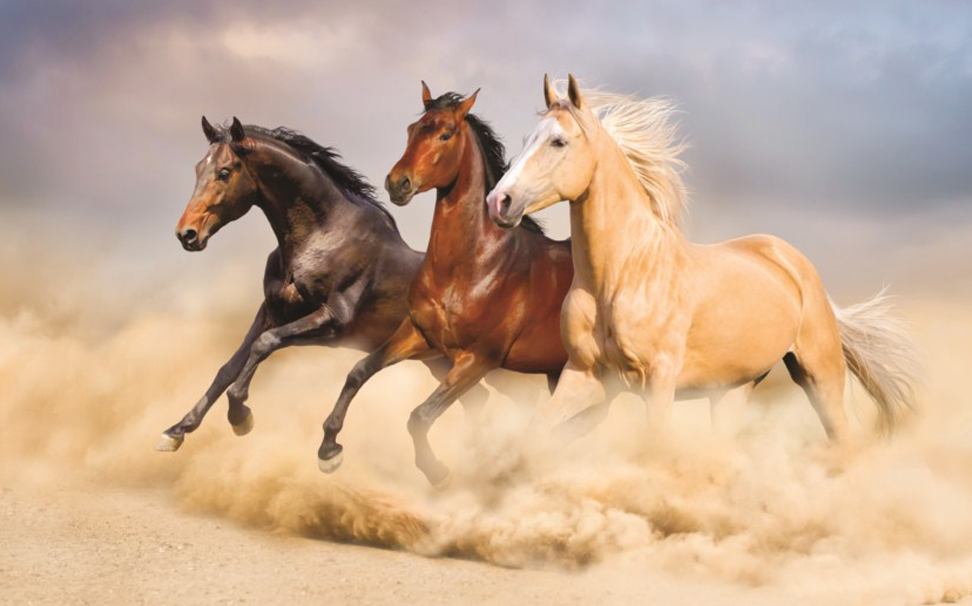 A herd of horse run gallop in sand - Marshalls