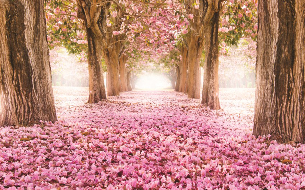 The romantic tunnel of pink trees - Marshalls