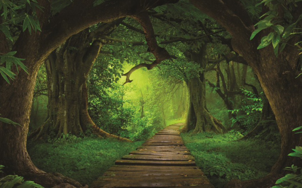 A peaceful wooden path throght a dense forest - Marshalls