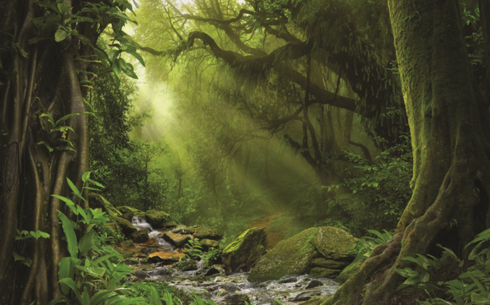 A wonderful view of stream through a tropical forest - Marshalls
