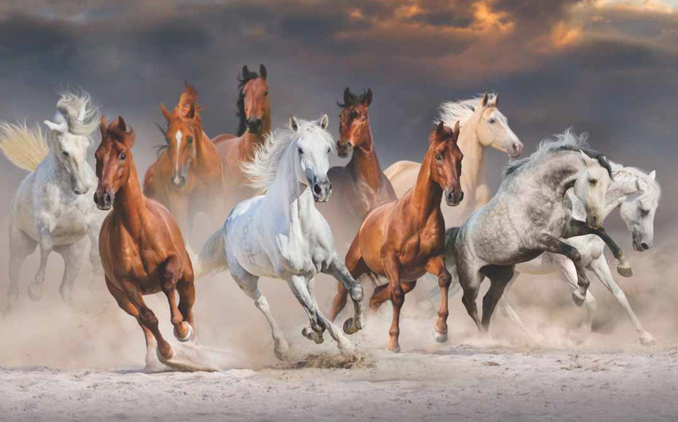 A dramatic view of a herd of horses running against the desert dust - Marshalls