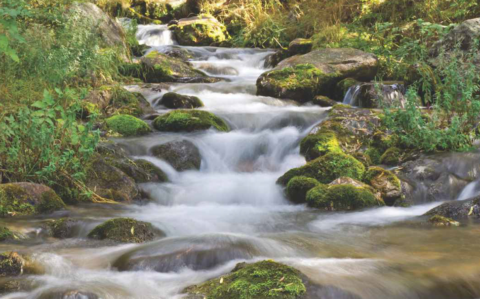 Forest stream flowing over rocks wallpaper - Marshalls
