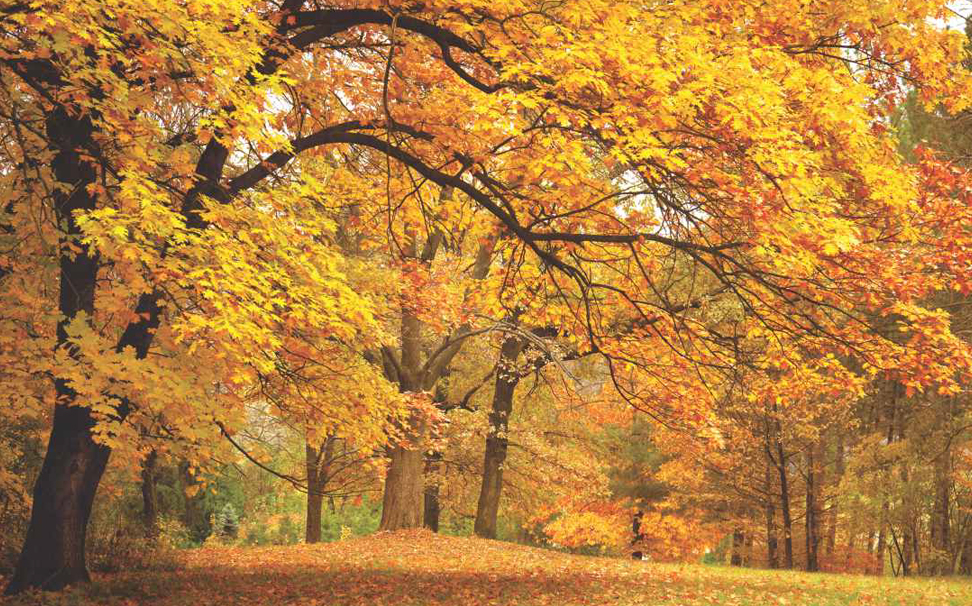 A gorgeous display of fresh autumn morning fall foliage wallpaper - Marshalls