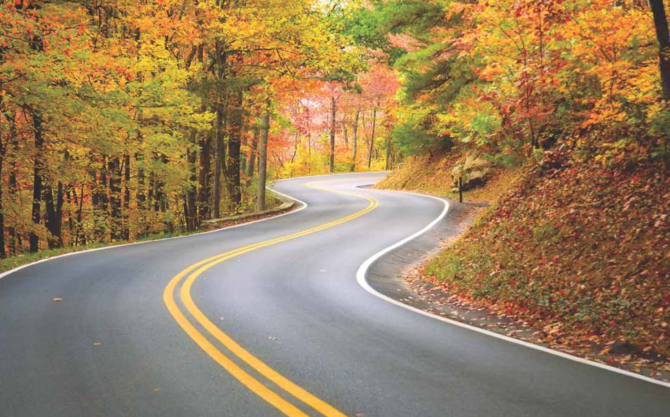 A perfect winding road through forest wallpaper - Marshalls