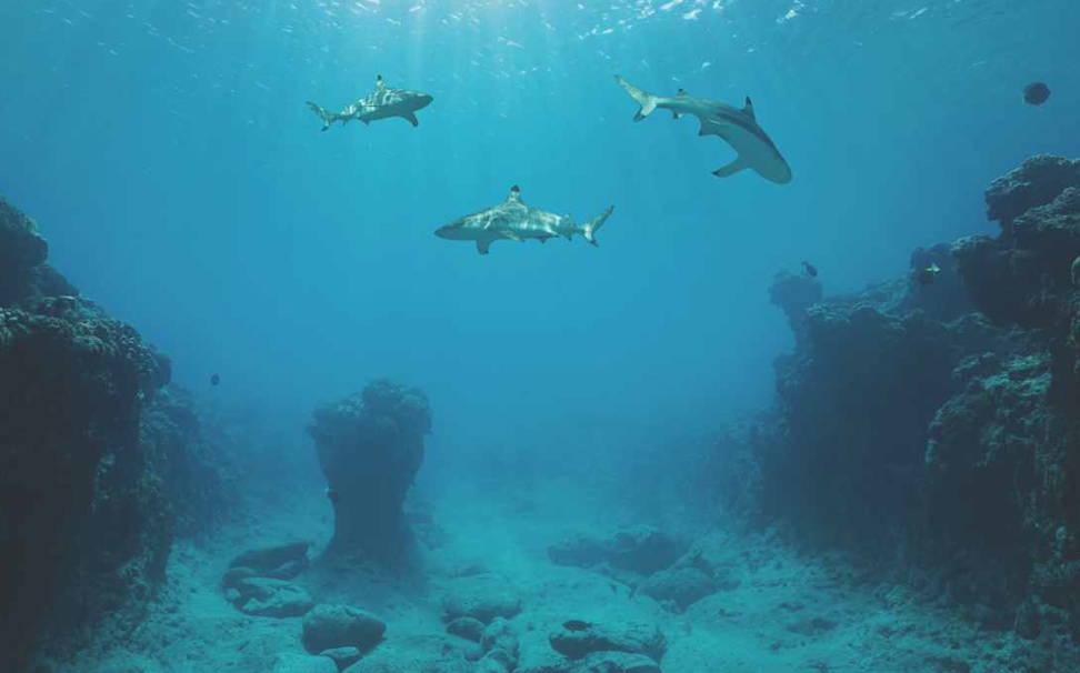 A territory of sharks, Pacific ocean, French Polynesia wallpaper - Marshalls